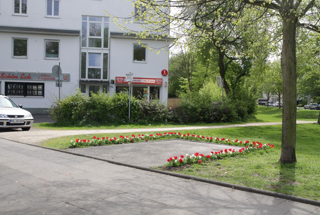 Tulipa 1
